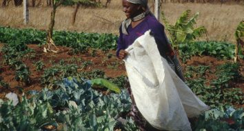 Improved Agricultural Opportunities for youth and women of the Gambia